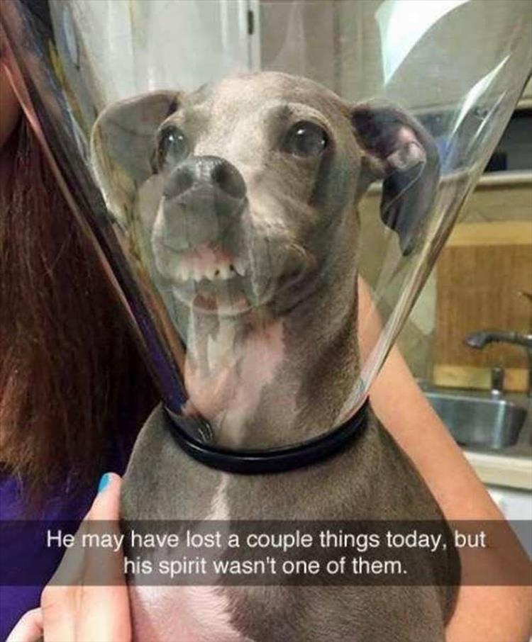 Image of: Weird Afunnydoginacone Dump Day Funny Animal Pictures Of The Day 23 Pics