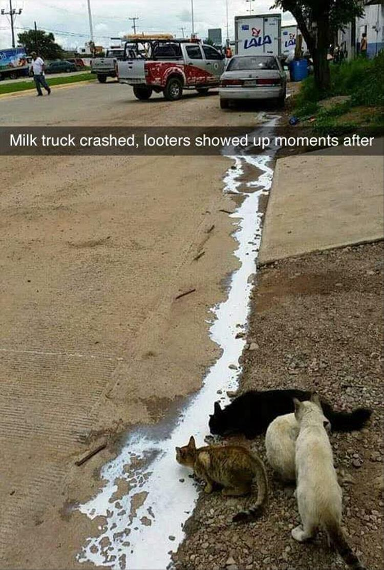 a milk truck crashed