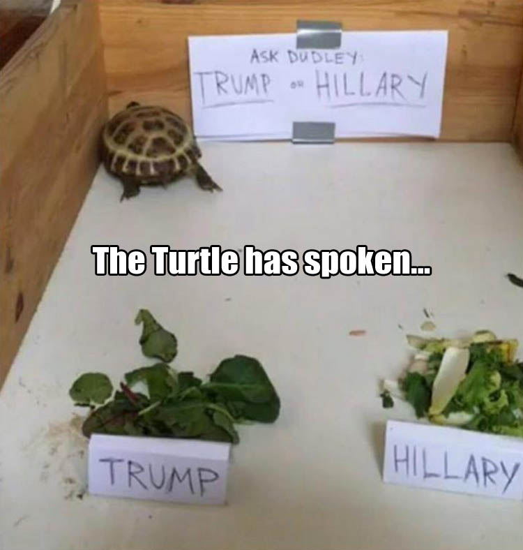 a-turtle-voting-for-president