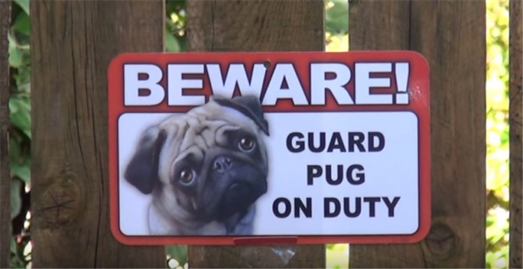 beware of dogs (1)