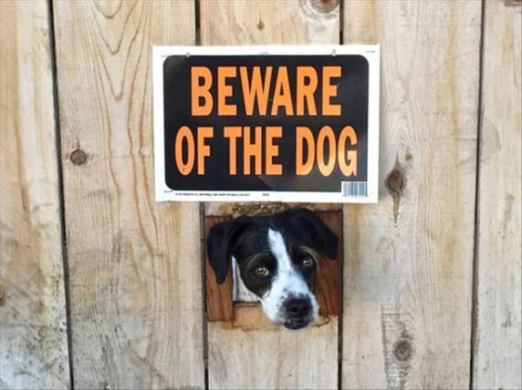 beware of dogs (4)