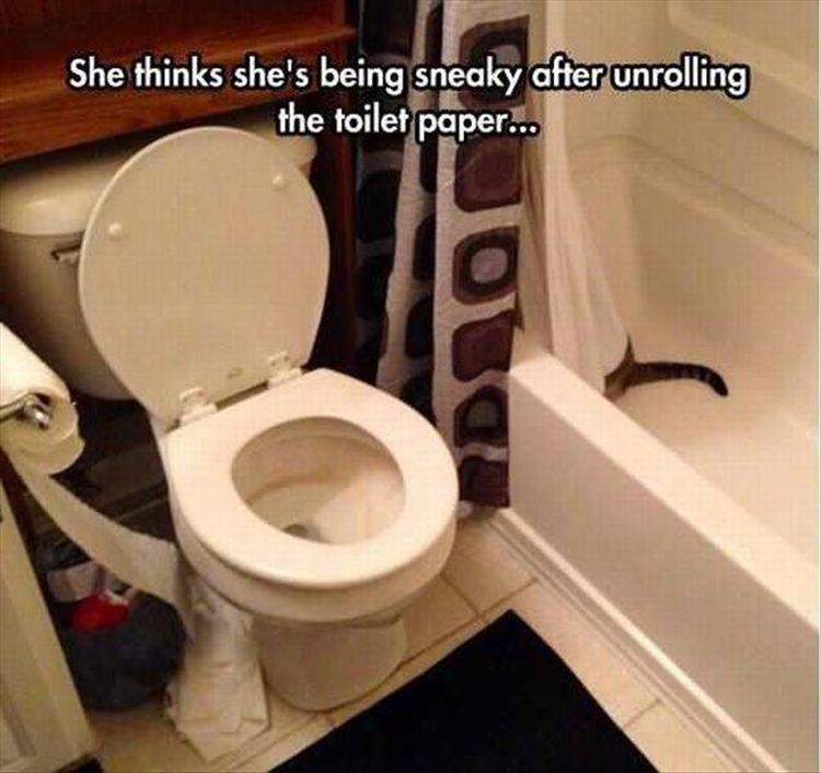 cat-and-toilet-paper