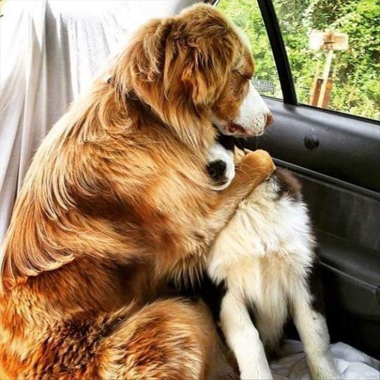 dogs-going-to-the-vet-1