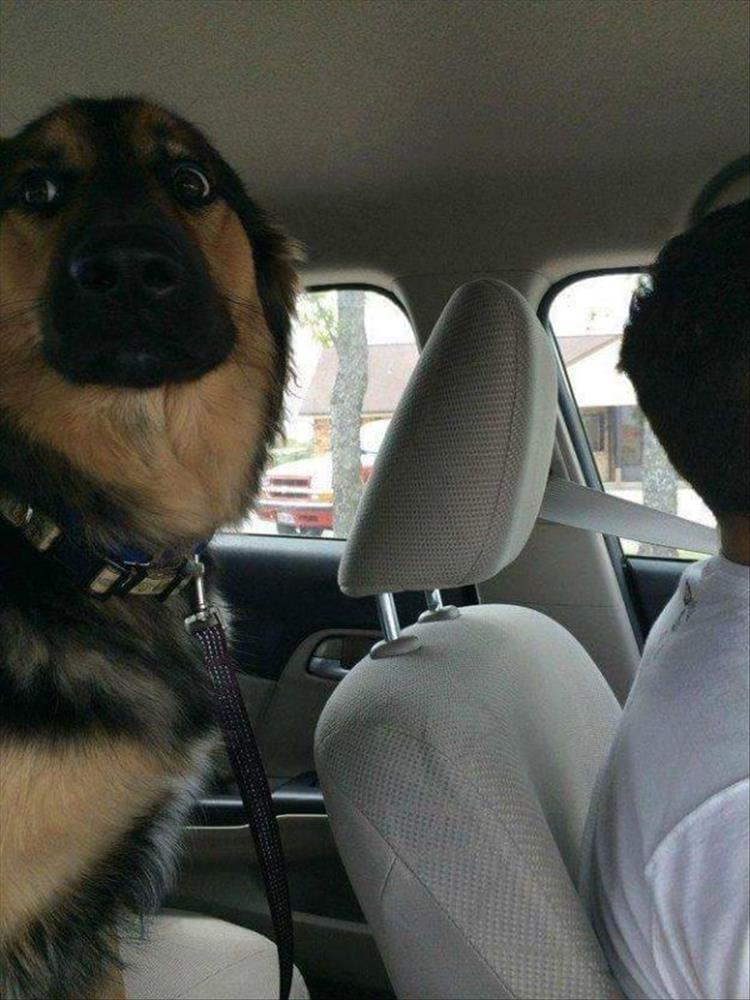 dogs-going-to-the-vet-2