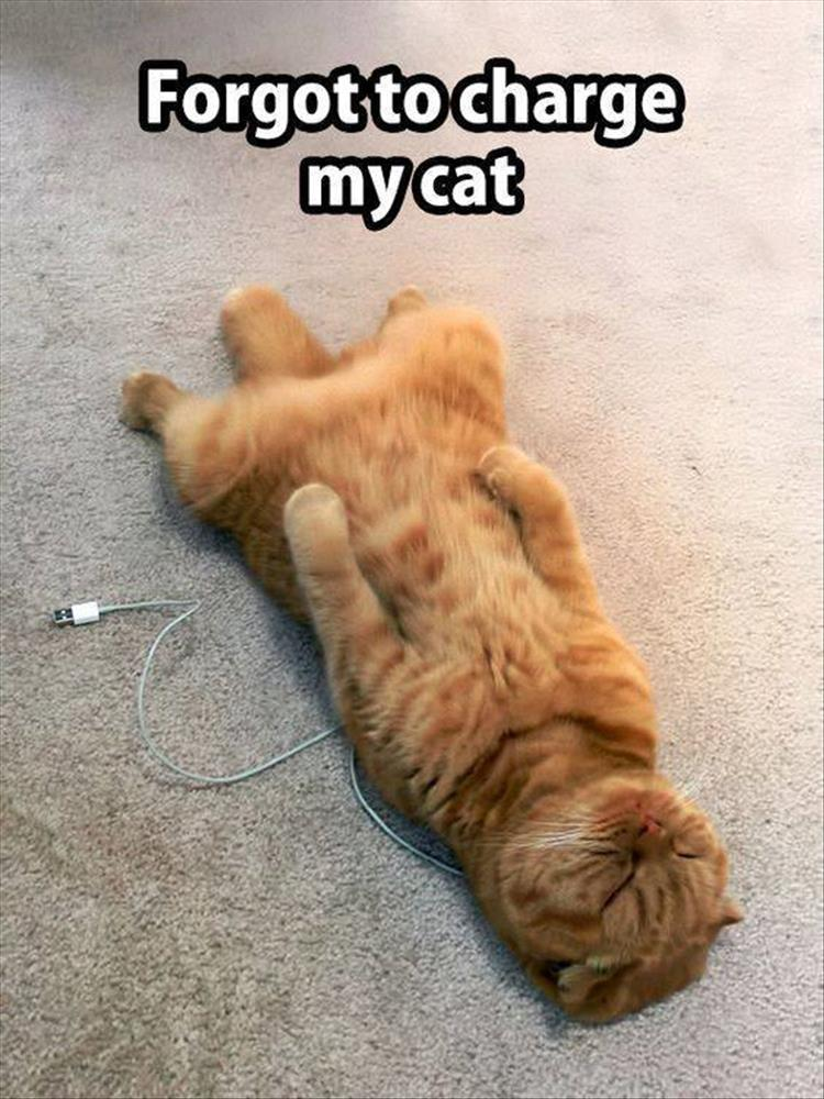 forgot-to-charge-my-cat