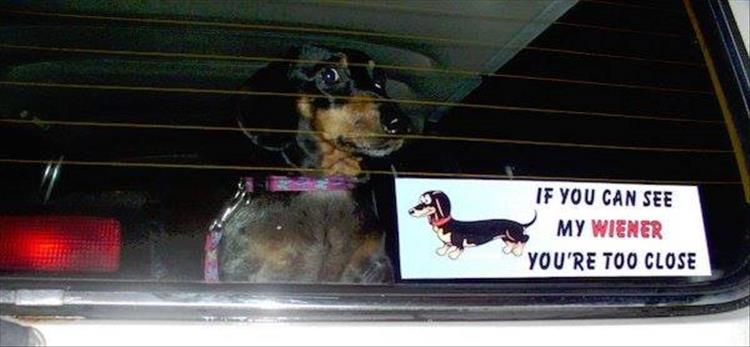 if-you-can-see-my-dog-funny-bumper-stickers