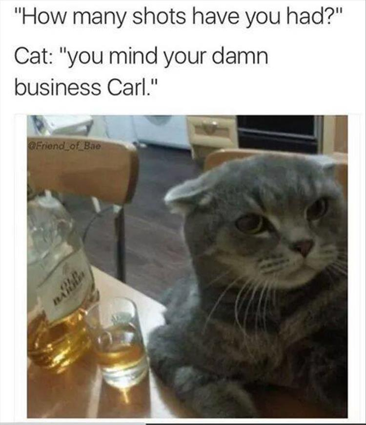 mind your own business cat