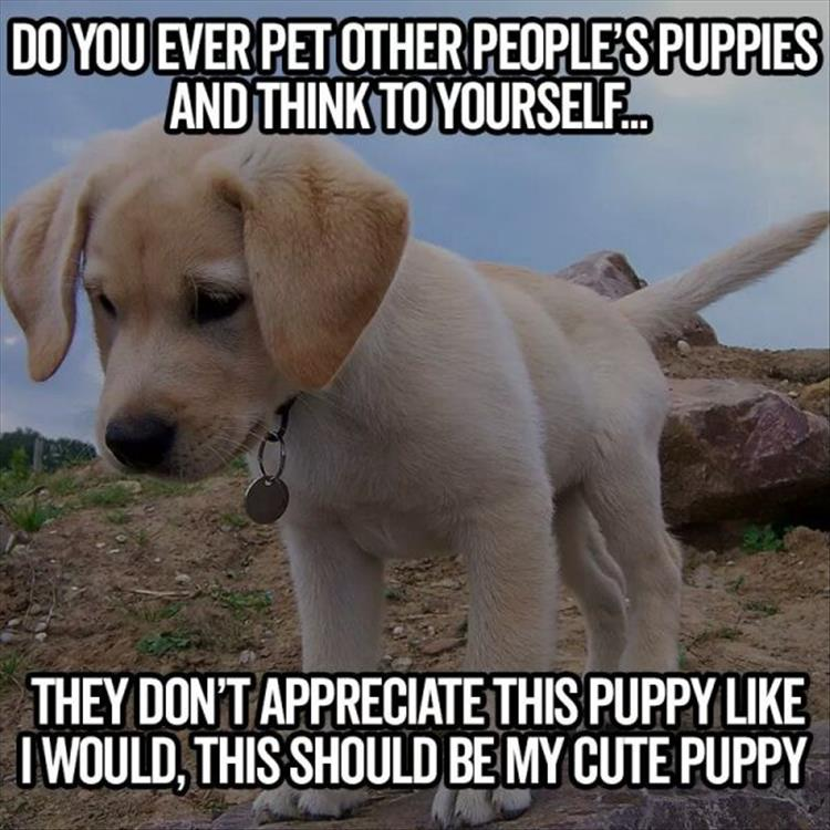 petting-puppies-funny-animal-pictures