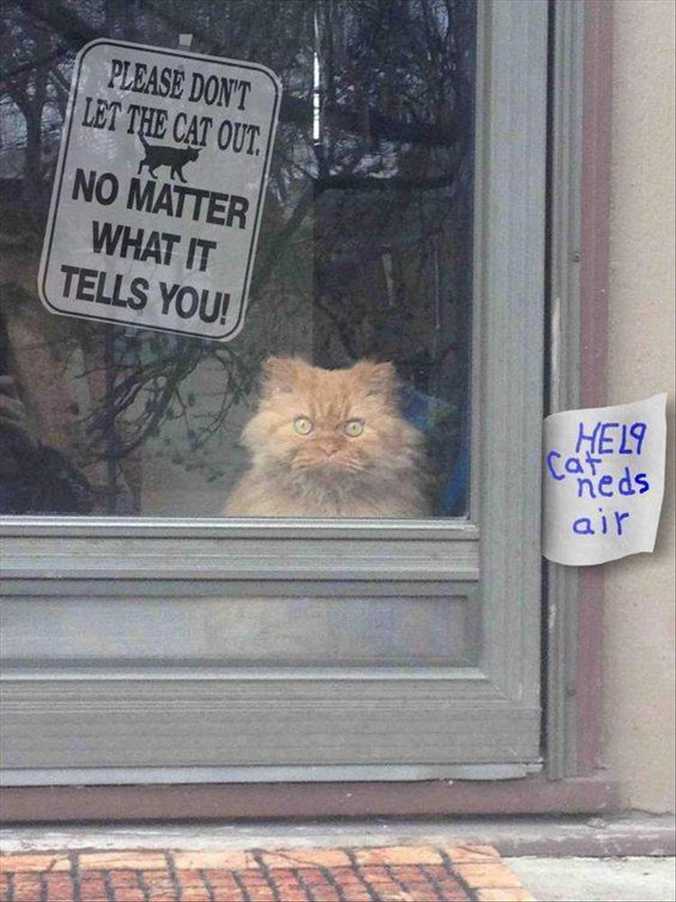please don't let the cat out