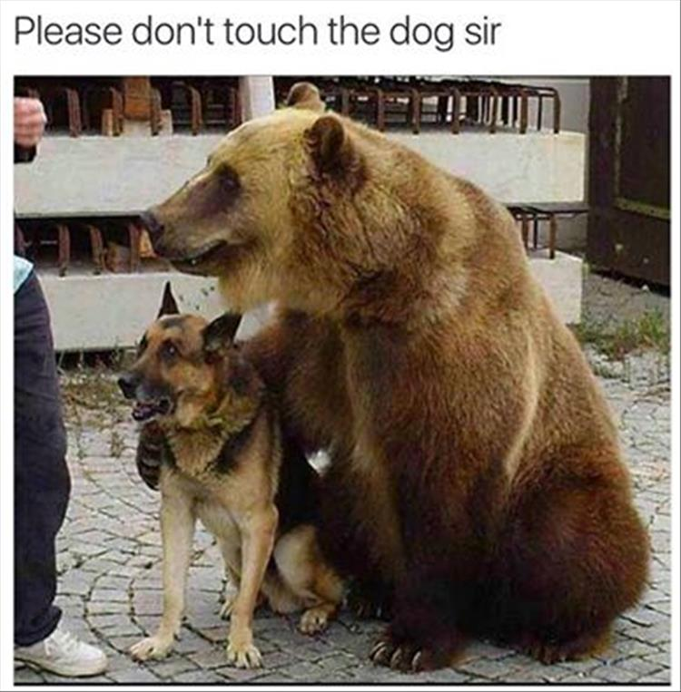 please don't touch the dog sir