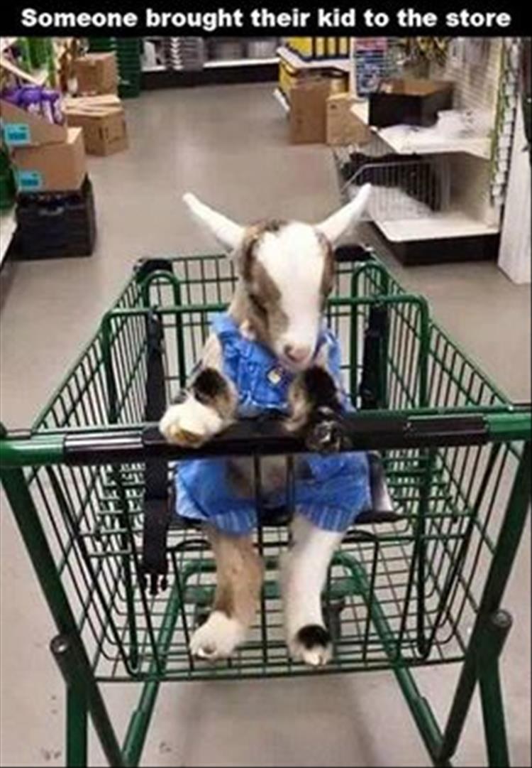 shopping goat