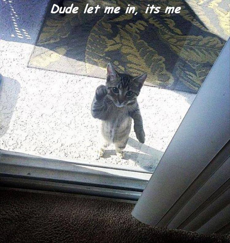 the cat wants in
