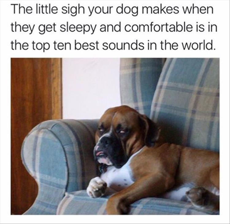 the-cutest-dogs