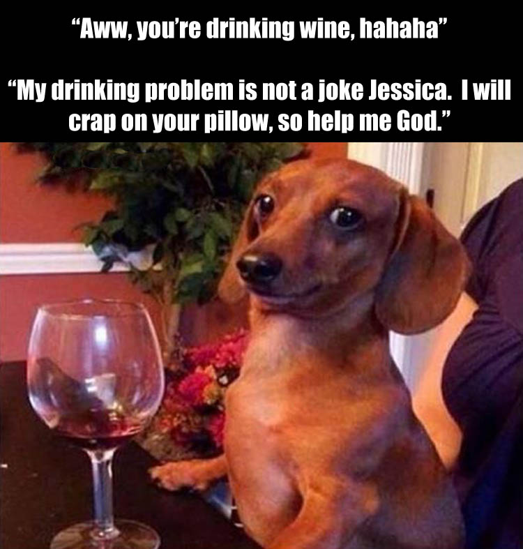 the-dog-has-a-drinking-problem