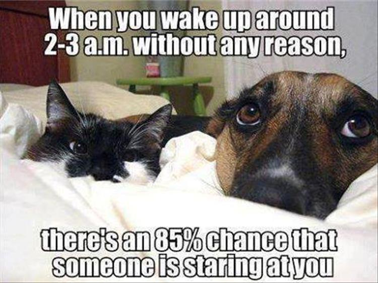 waking up dog and cat