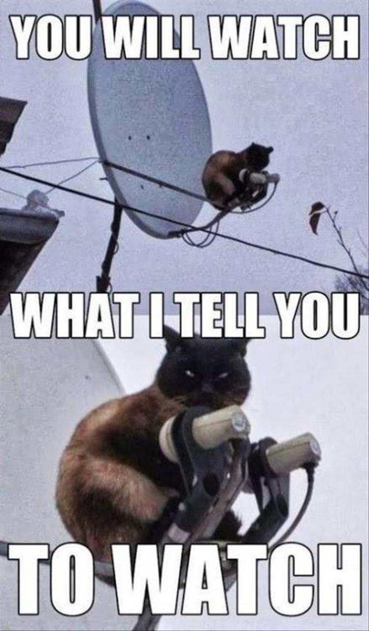 you-will-watch-what-cat-tells-you-to-watch