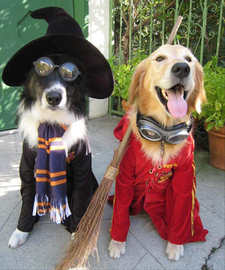 The Best Halloween Costume Ideas For Your Dogs