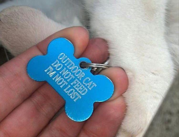 funny-animal-tags-7