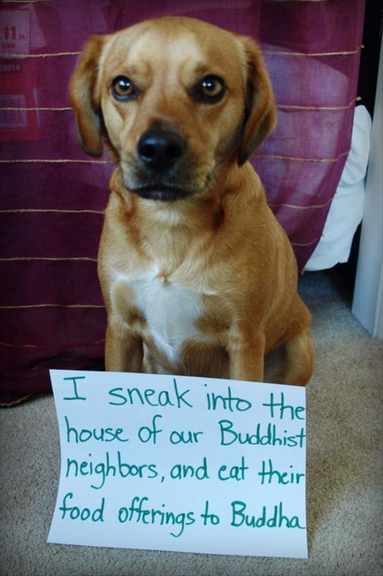 The Funniest Pet Shaming You ll See All Day 16 Pics