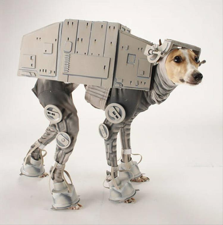 May The 4th Be With You Dog: The Best Halloween Costume Ideas For Your Dogs