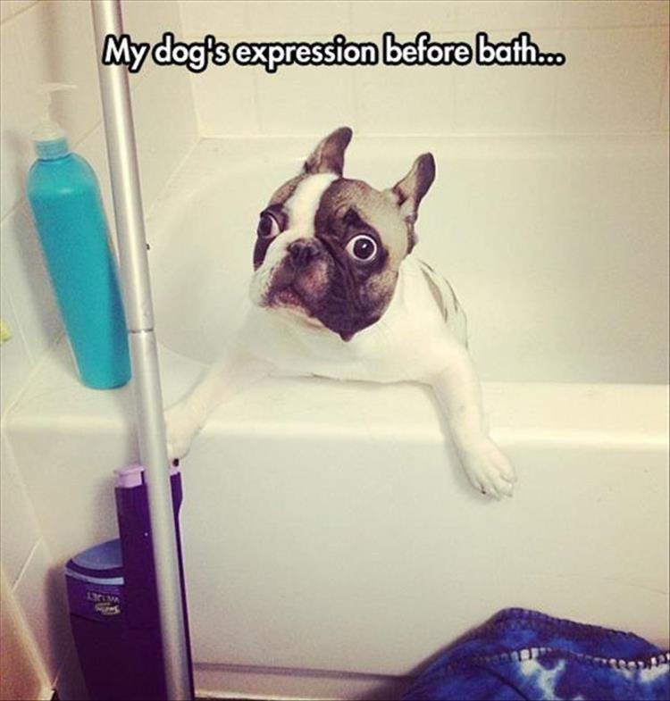 the-funny-animal-pictures-10