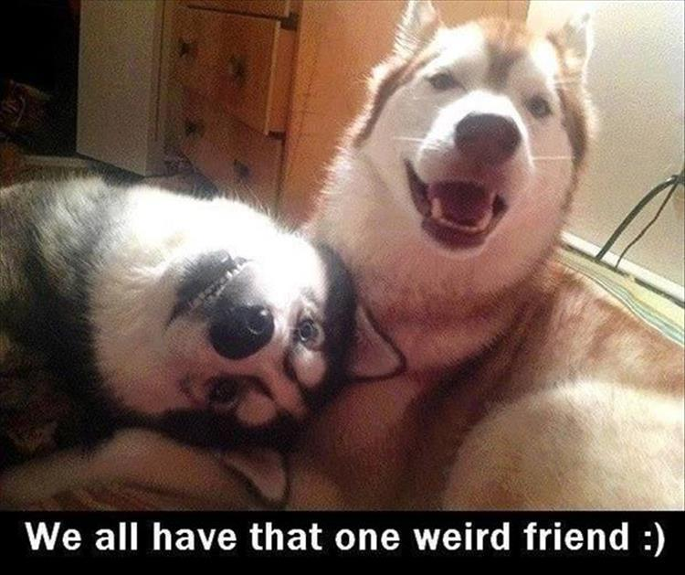 the-funny-animal-pictures-11