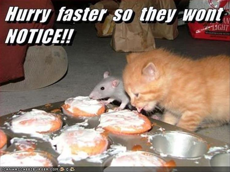 the-funny-animal-pictures-8
