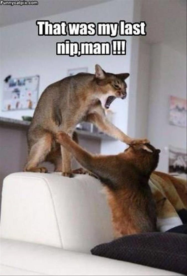 the-funny-animals-12