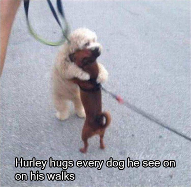 the-funny-animals-17