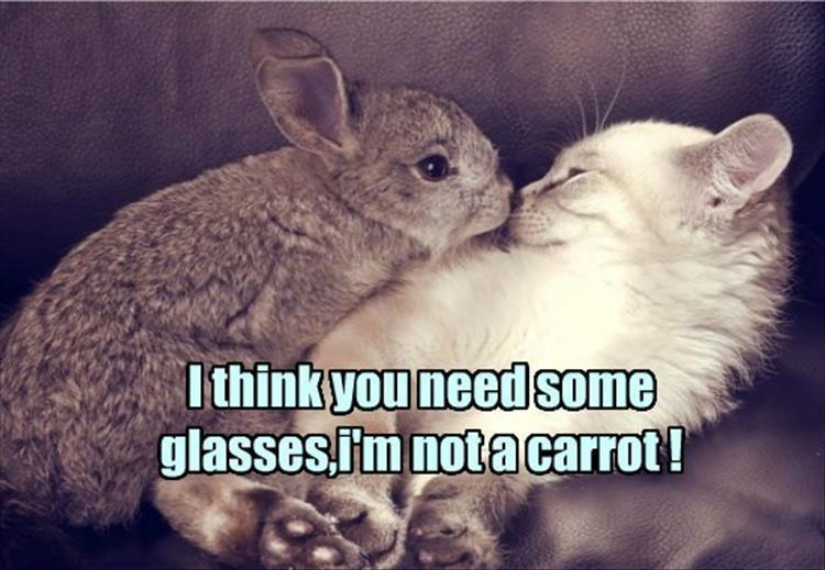 the-funny-animals-7