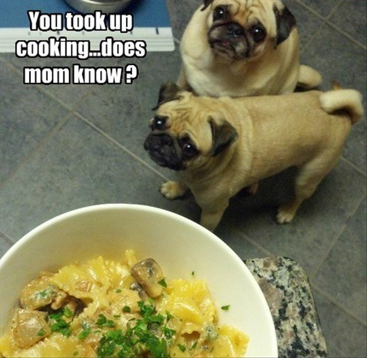 the-funny-animals-8