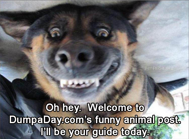0-welcome-to-dumpadays-funny-animal-pictures-ill-be-your-guide