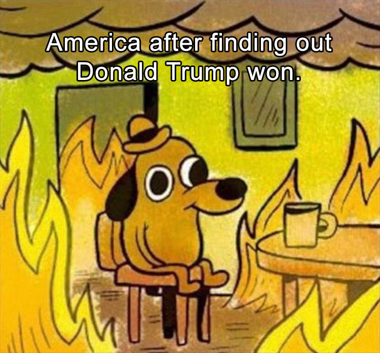 Funny Memes If Donald Trump Wins : The internet reacts to donald trump winning with funny
