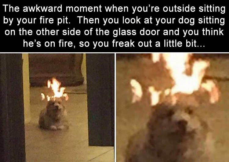 b-is-the-dog-on-fire