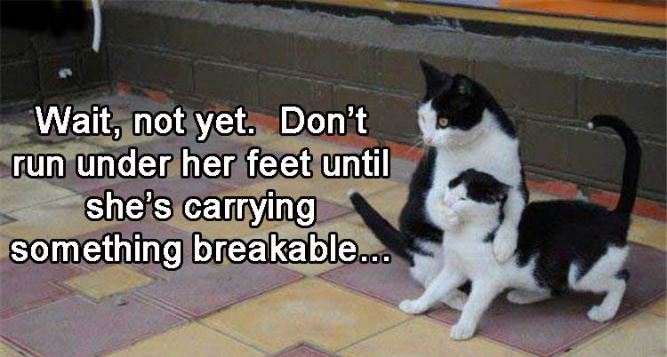 dont-run-under-her-feet-yet-wait-until-shes-carrying-something-breakable