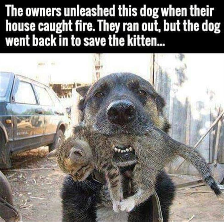 faith-in-humanity-restored-6