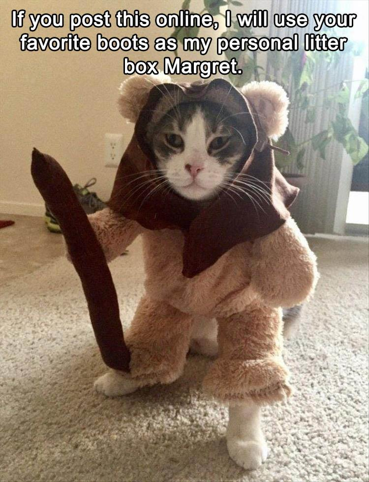 funny-animal-pictures-11