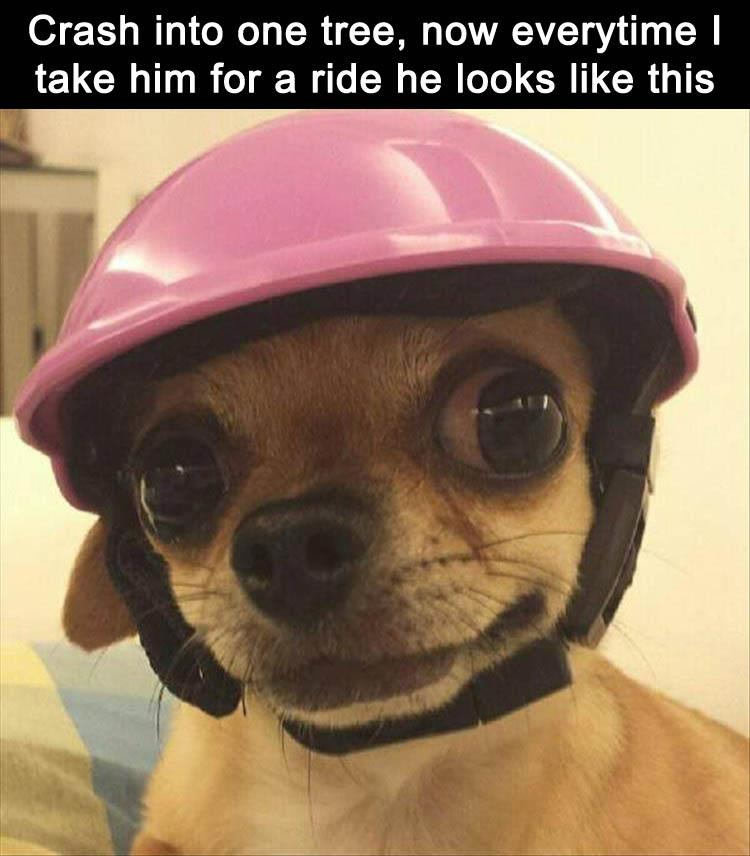 funny-animal-pictures-2