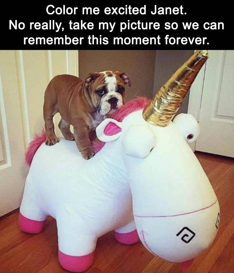 funny-animal-pictures-4