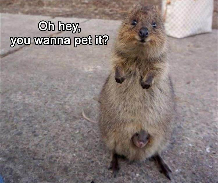 funny-animal-pictures-6