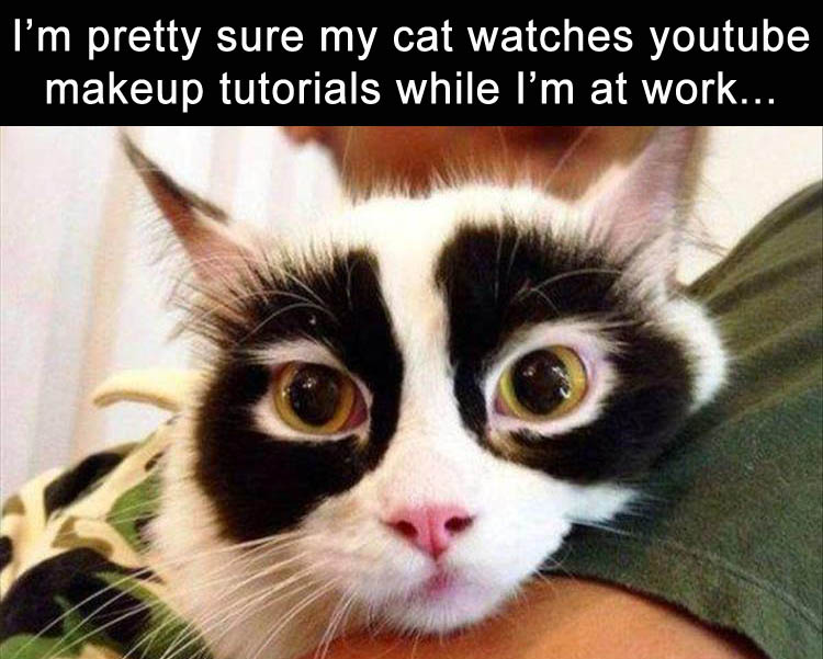 Funny Meme June 2015 : Funny animal pictures of the day pics