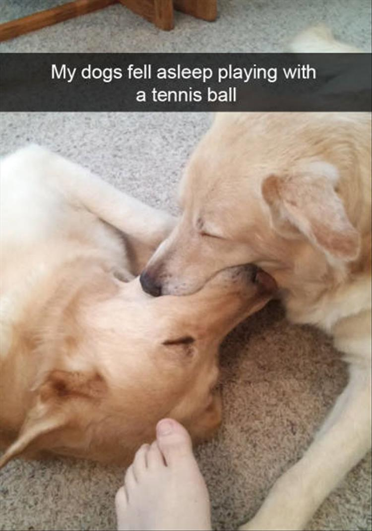 funny-dogs-snapchat-1