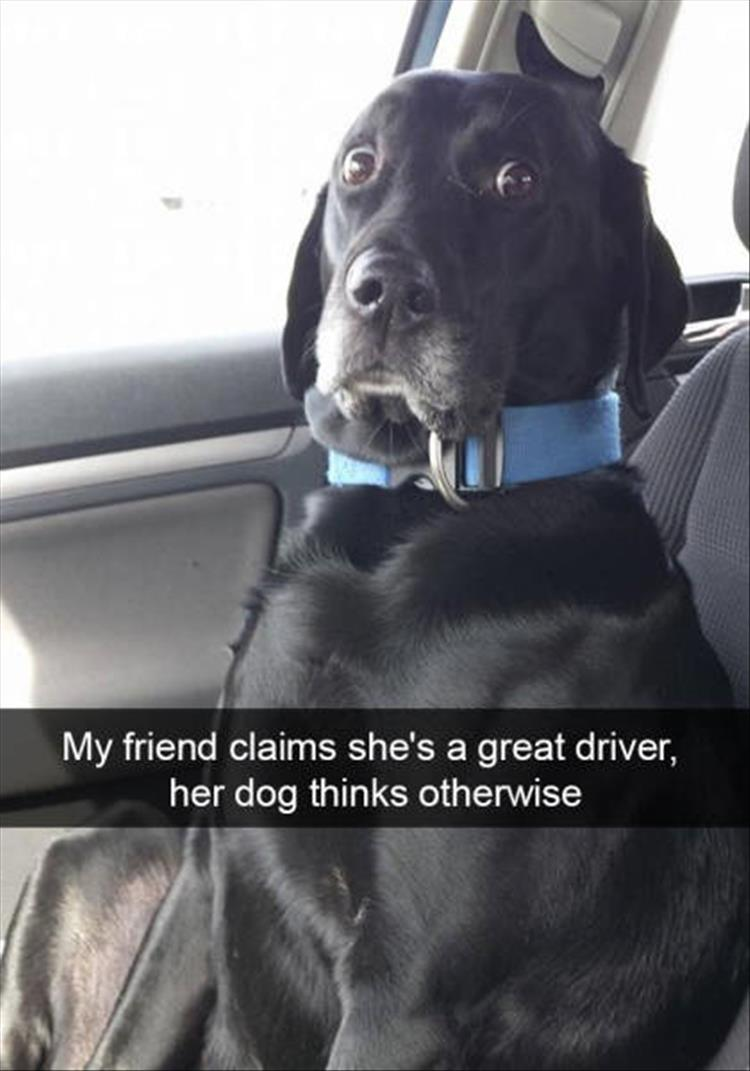 funny-dogs-snapchat-14