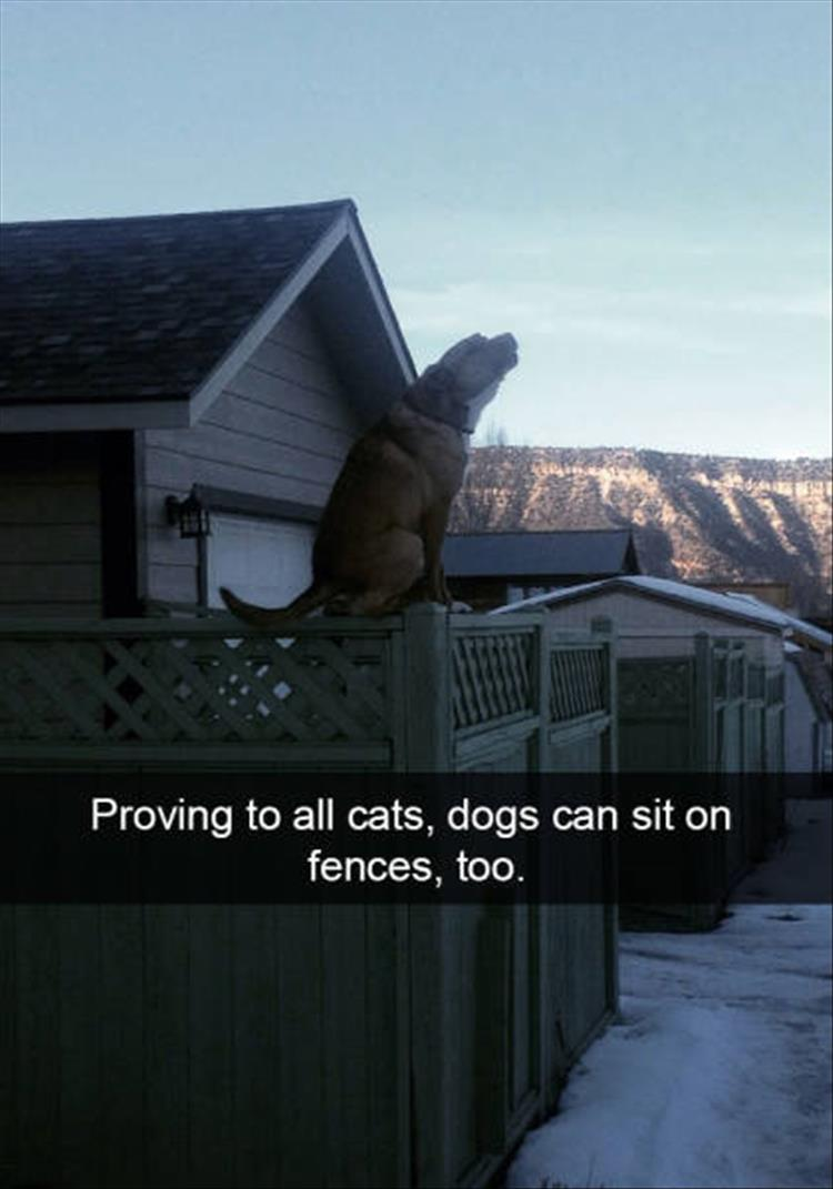 funny-dogs-snapchat-17