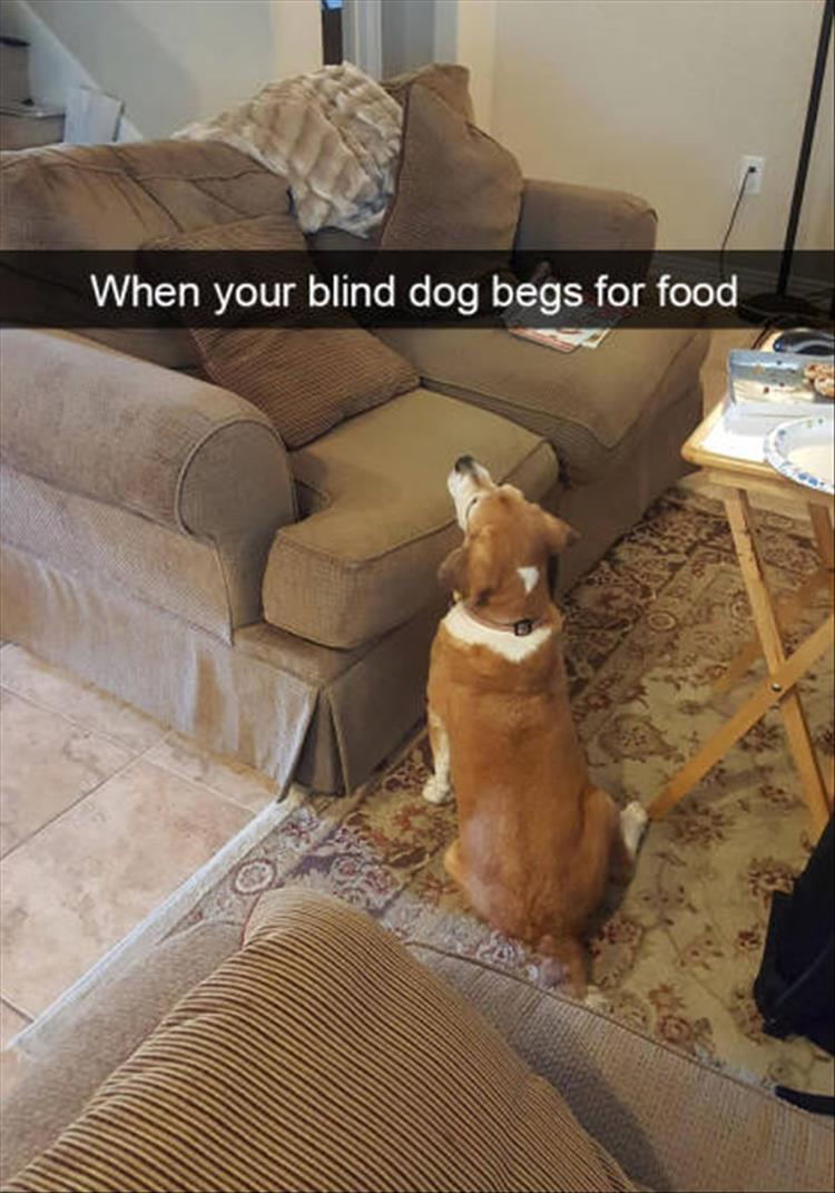 funny-dogs-snapchat-18