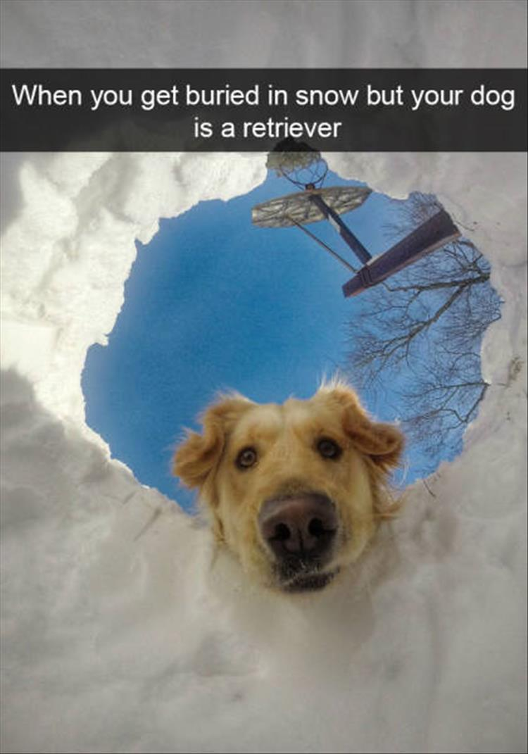 funny-dogs-snapchat-19