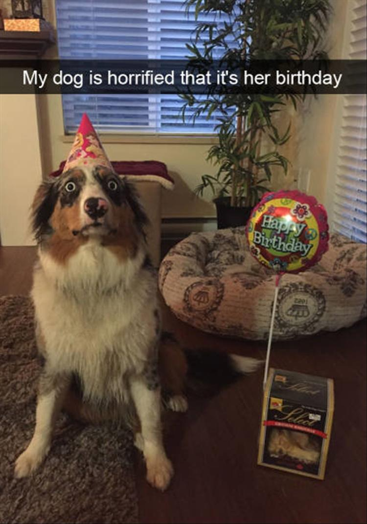 funny-dogs-snapchat-20