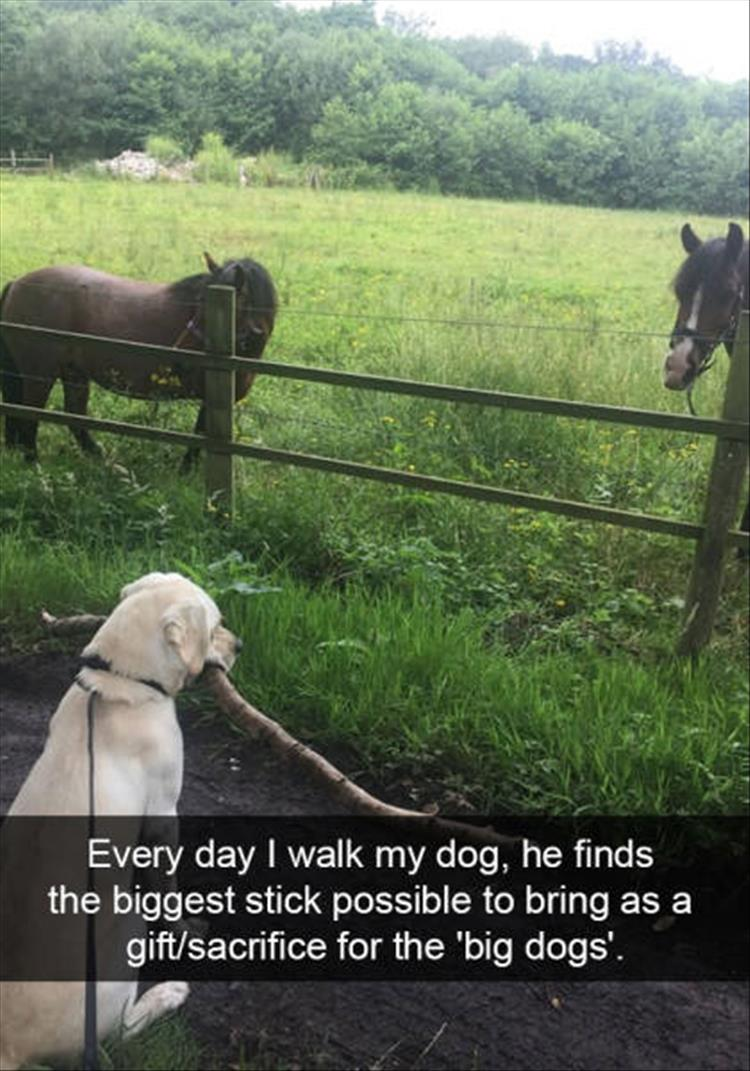 funny-dogs-snapchat-21