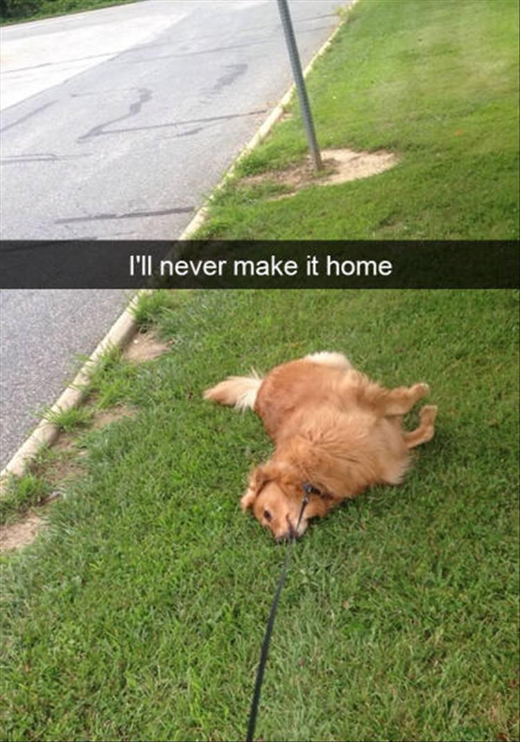 funny-dogs-snapchat-23