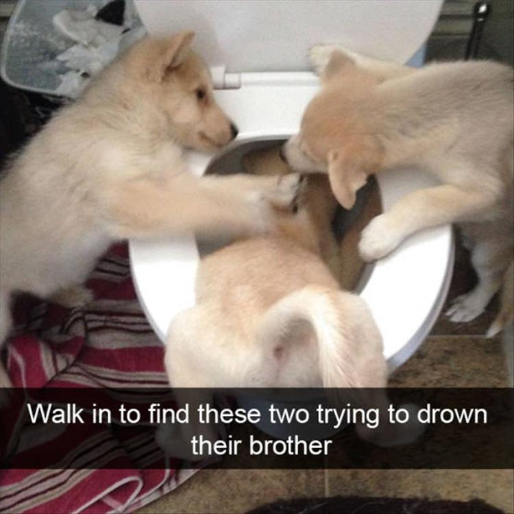 funny-dogs-snapchat-3